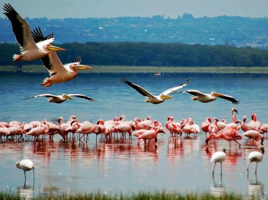 La nature avec les oiseaux