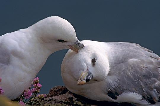 """Résultat de recherche d'images pour """"la beauté de la nature en présence des animaux"""""""